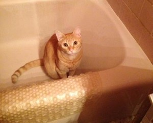 """I'm just a cat, standing in a bathtub, asking you to feed me."""